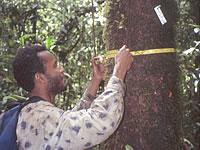 tree_measurement